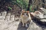 Кот - житель лестницы.