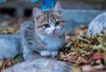 Яшмовый котик...